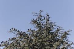 Multitud de pájaros en árbol Fotografía de archivo libre de regalías