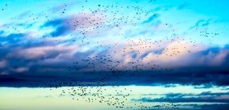 Multitud de pájaros en el cielo azul con las nubes de arriba Fotografía de archivo