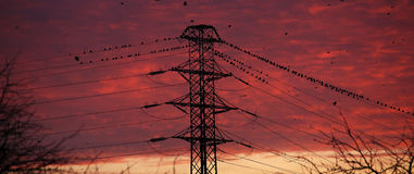 multitud de pájaros en el polo eléctrico Foto de archivo