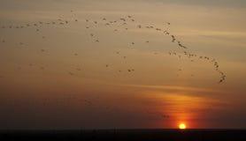 Multitud de pájaros en la puesta del sol fotografía de archivo libre de regalías