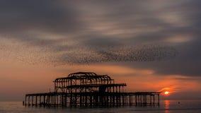 Multitud de pájaros en la puesta del sol Imágenes de archivo libres de regalías