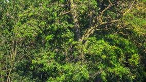 Multitud de pájaros en un árbol verde almacen de video