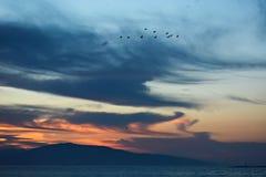 Multitud de pájaros por la mañana Fotos de archivo
