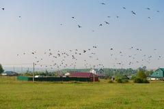 Multitud de pájaros sobre el campo verde Imagen de archivo