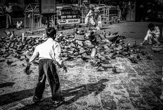 Multitud de palomas foto de archivo