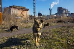 Multitud de perros perdidos Imagen de archivo libre de regalías