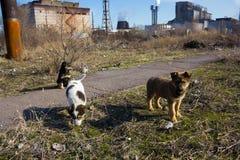 Multitud de perros perdidos Fotografía de archivo