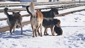 Multitud de perros salvajes sin hogar al lado del invierno ferroviario el problema de animales domésticos abandonados almacen de metraje de vídeo