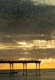 Multitud de Starling sobre el embarcadero de Aberystwyth Fotografía de archivo libre de regalías