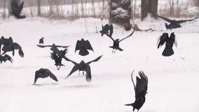Multitud del lanzamiento de los cuervos metrajes