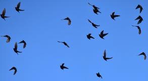Multitud del pájaro Imágenes de archivo libres de regalías