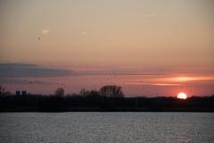 Multitud del pájaro de la puesta del sol Fotografía de archivo