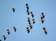 Multitud del vuelo del pájaro fotos de archivo