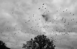 Multitud dramática de pájaros imagen de archivo libre de regalías