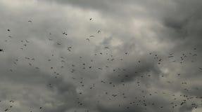 Multitud dramática de pájaros imagen de archivo