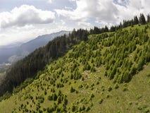 Multitud en las montañas de Ciucas, Rumania de las ovejas Foto de archivo libre de regalías