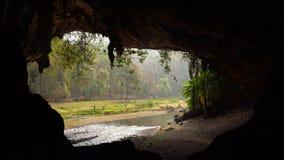 Multitud enorme de los pájaros del trago que vuelan en la mañana cerca de la entrada de la cueva grande con el río que fluye de é metrajes