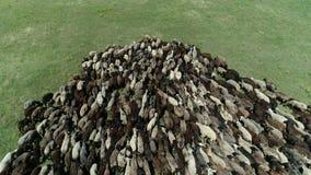 Multitud grande de ovejas almacen de metraje de vídeo