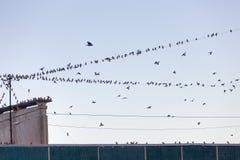 Multitud grande de pájaros Foto de archivo libre de regalías