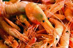 Multitude of boiled shrimps Stock Images