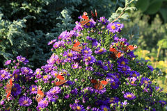 Multitude of butterflies Royalty Free Stock Images