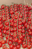 Multitude of cherry tomatoes at the market Royalty Free Stock Image