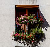 Flowers adorning a window in Paris. Multitude of Flowers adorning a window in Paris Royalty Free Stock Photography