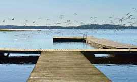 Multitude of gulls on pier Royalty Free Stock Photo
