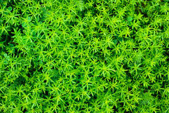 Multitude Leaves Royalty Free Stock Photo