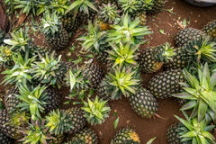 Multitude of pineapples in the market Stock Photos