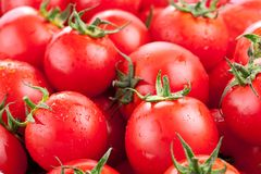 Multitude of ripe tomatoes Royalty Free Stock Image