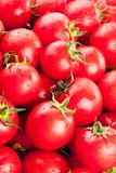 Multitude of ripe tomatoes Stock Photography