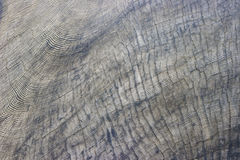 Multitude of Sequoia Tree Rings Stock Photo