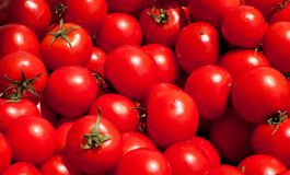 Multitude of tomatoes Stock Photo