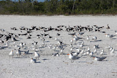 Multitudes de pájaros Imagen de archivo libre de regalías
