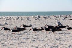Multitudes de pájaros Fotografía de archivo