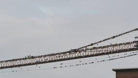 Multitudes de pájaros en una grúa de construcción que se prepara para emigrar para calentar países almacen de metraje de vídeo
