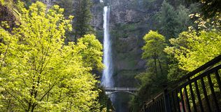 Multnomah Falls below the bridge with Bright Trees. Multnomah Falls below the bridge. The Bright Trees glisten in the sun providing the perfect framing for the stock image