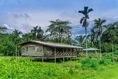 Mulu (Sarawak), Borneo royalty free stock images