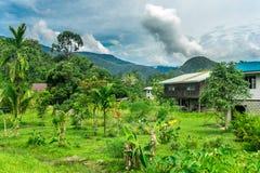 Mulu (Sarawak), Borneo stock photos