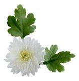 mum λευκό Στοκ εικόνες με δικαίωμα ελεύθερης χρήσης