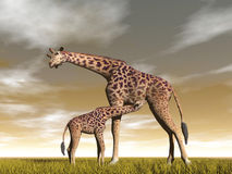 Mum and baby giraffe - 3D render Stock Photo