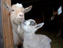 Mum en zoon Stock Fotografie