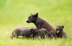 Mum för arktisk räv med skämtsamma gröngölingar royaltyfri foto