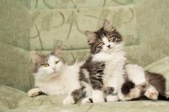 Mum figlarka i kot zdjęcie royalty free