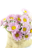 Mum flower color purple Stock Photos