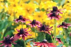 Mum flowers Stock Photography