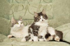 Mum kot i śliczna figlarka zdjęcie stock