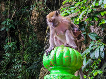 Scared baby monkey  Stock Photos