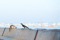 Mumbai. The real India, unusual neighborhood birds and cats royalty free stock image